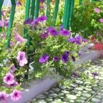 Ban công rực rỡ sắc hoa yến thảo