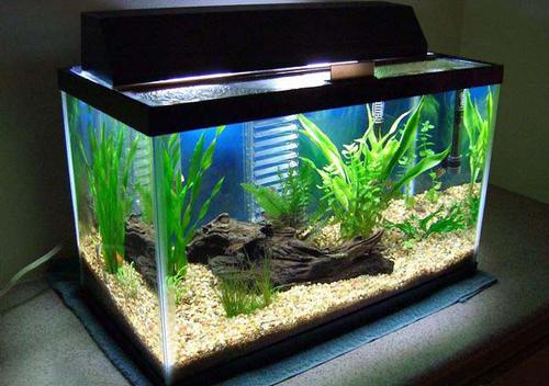 Nên thiết kế bể cá trong phòng khách như thế nào?2